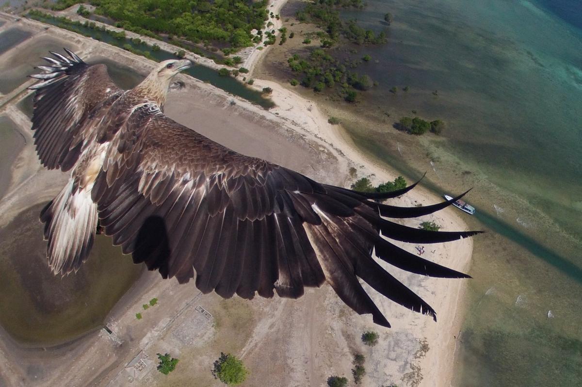 En iyi 19 drone fotoğrafı 14