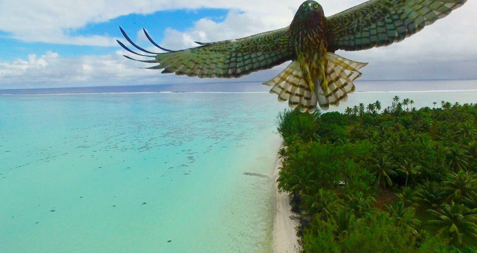 En iyi 19 drone fotoğrafı 5