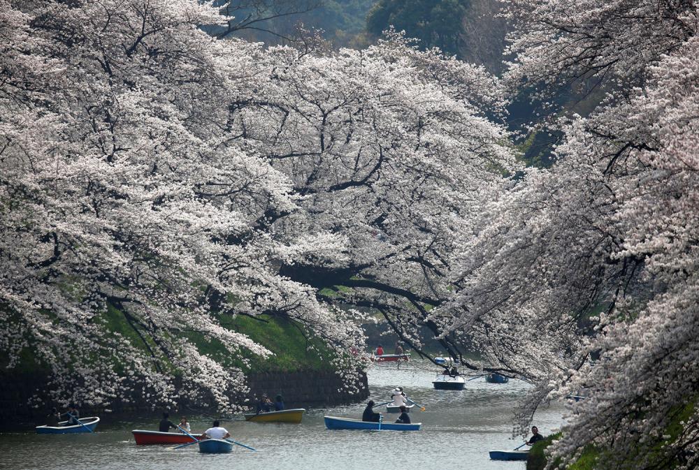Farklı ülkelerden etkileyici bahar kareleri 7