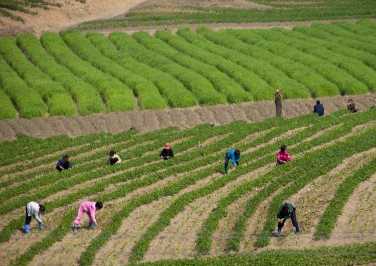 Kuzey Kore'nin yasak fotoğrafları 24