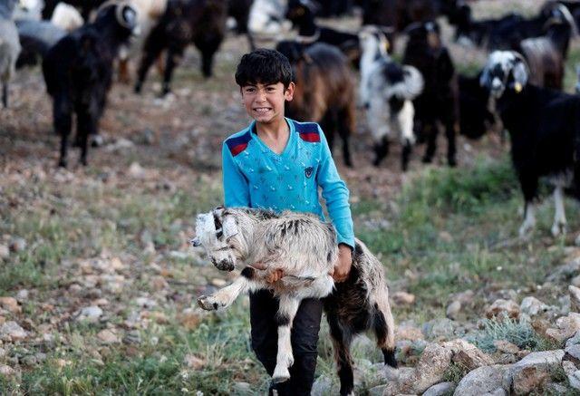 Bin yıllık hikaye: Anadolu'da yaşayan son göçebe yörükler 13