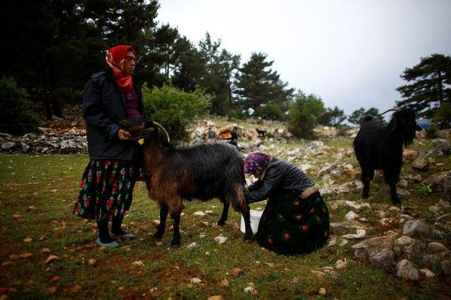 Bin yıllık hikaye: Anadolu'da yaşayan son göçebe yörükler 14