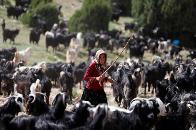 Bin yıllık hikaye: Anadolu'da yaşayan son göçebe yörükler 3