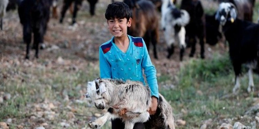 Bin yıllık hikaye: Anadolu'da yaşayan son göçebe yörükler