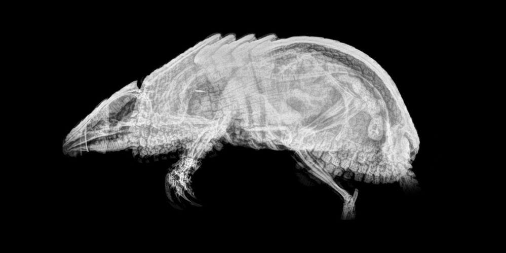 ABD'de hayvanat bahçesindeki hayvanların X-Ray görüntüleri 11