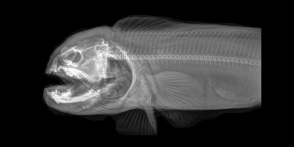 ABD'de hayvanat bahçesindeki hayvanların X-Ray görüntüleri 7