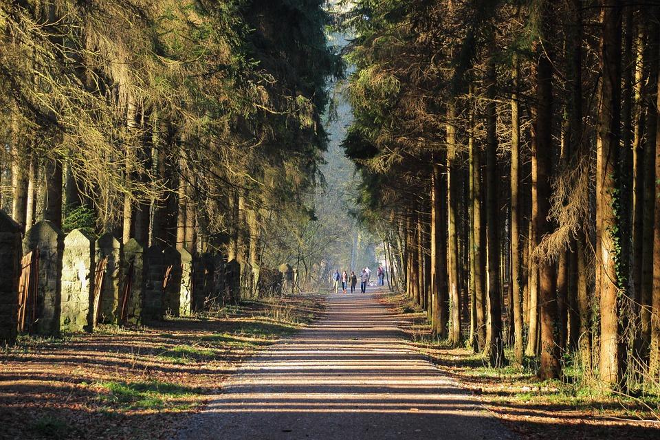 Ağaç gölgesi, yılda yarım milyar dolar tasarruf sağlıyor