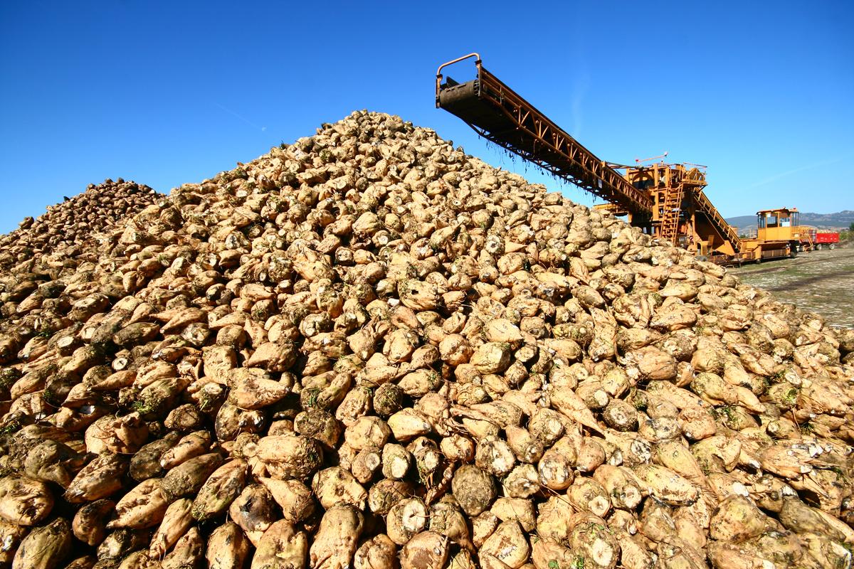 Devlet 14 şeker fabrikasını 'elden çıkarıyor': Özelleştirme için ihaleler yakında