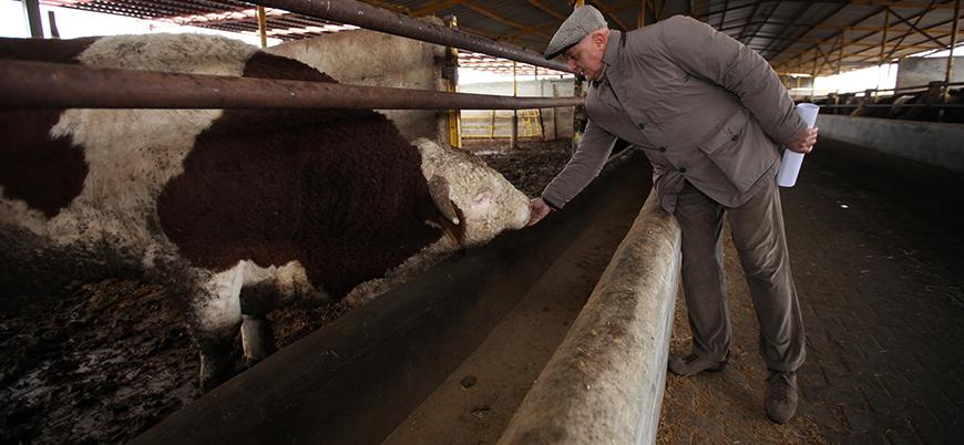 Türkiye Rusya'dan kırmızı et, süt ve deniz ürünleri ithal edecek