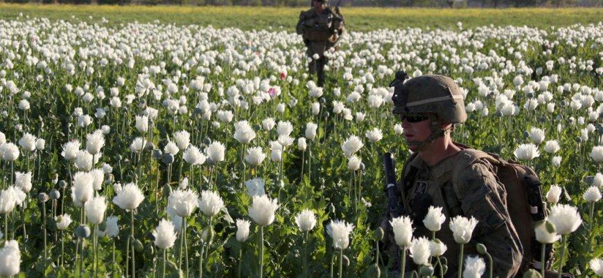 Afganistan'da afyon üretimi dosyası (İnfografik)