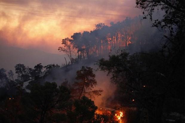 Kudüs'teki orman yangını söndürülemiyor