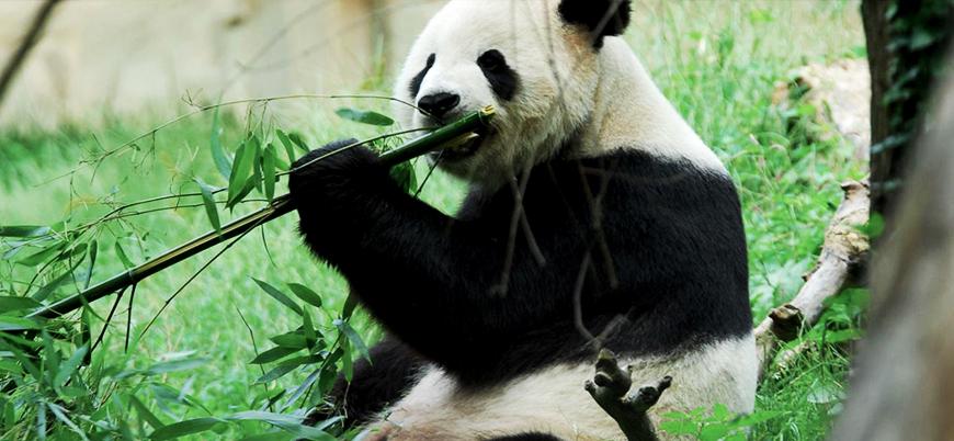 'Hayvanların yüzde 90'ı aynı zamanda ortaya çıktı'
