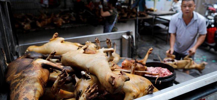 Köpeklerin metal sopalarla öldürüldüğü 'festival' başladı