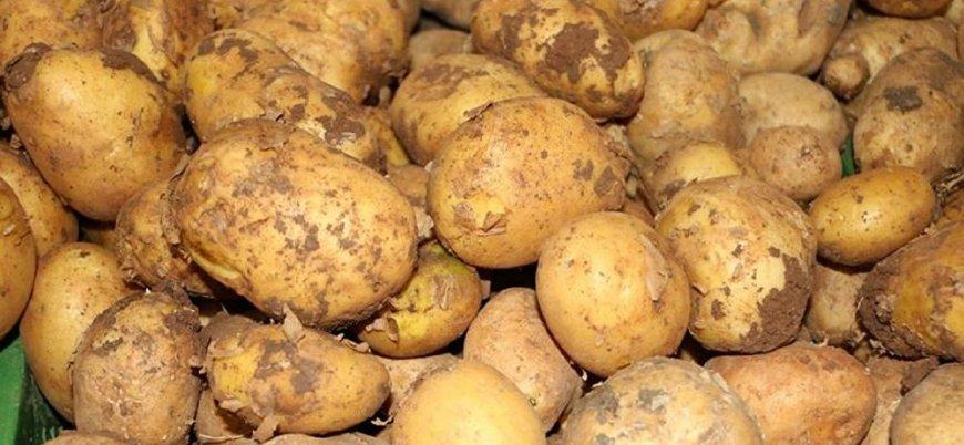 Patates üreticileri: Şok olduk, ithalatı gerektirecek bir durum yok