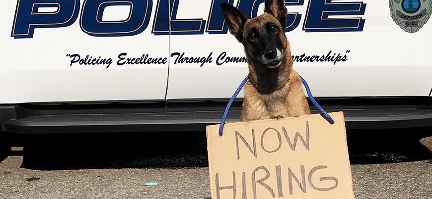 'Polis köpeğini öldürene 70 bin dolar'