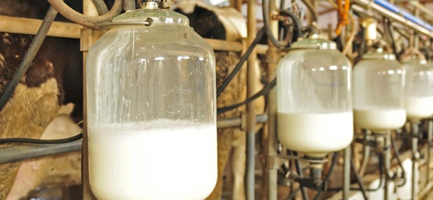 'Süte 50 kuruş zam' iddiası