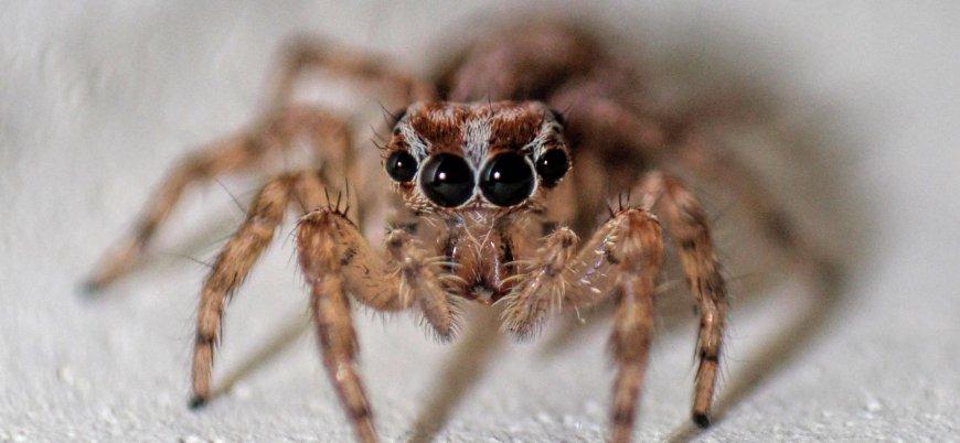 ABD'de 7 bin canlı böcek çalındı