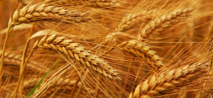 Türkiye Rus rublesiyle buğday ithal edecek