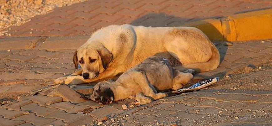 Hayvanlara işkenceye hapis cezası getiriliyor