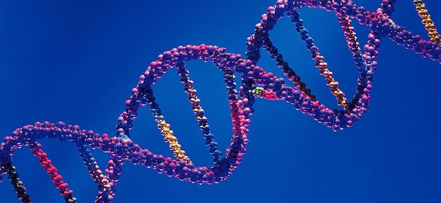 Japonya embriyonun genetiğiyle oynayacak