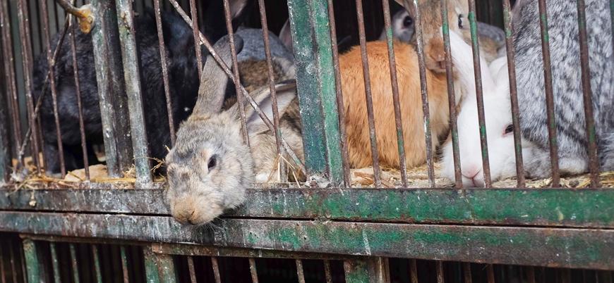 Venezuela'da krize karşı 'tavuk ve tavşan' yöntemi