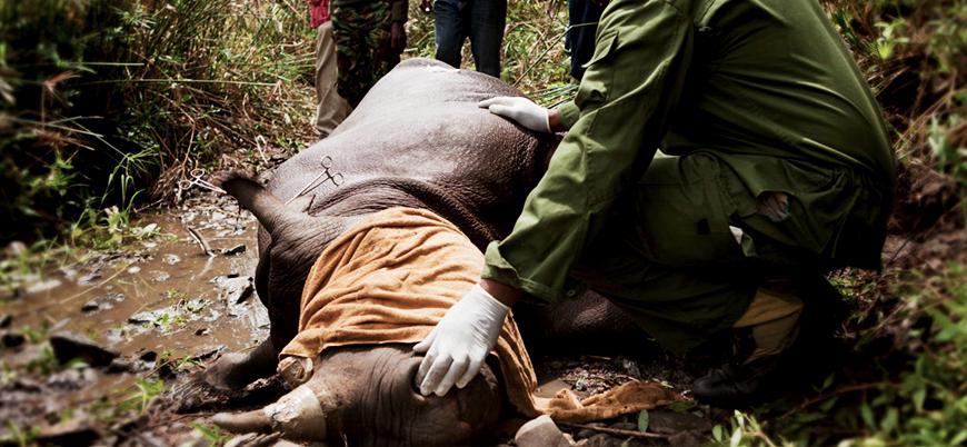 İnsanlık 40 yılda hayvanların yüzde 60'ını yok etti