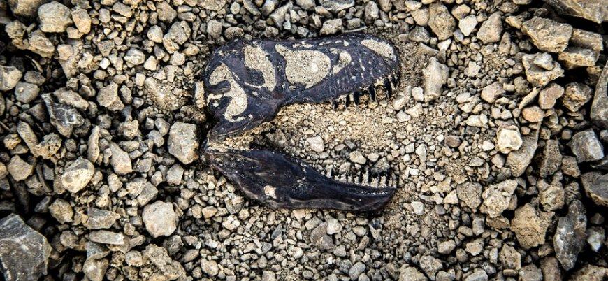 Arjantin'de 110 milyon yıllık dinazor fosili bulundu