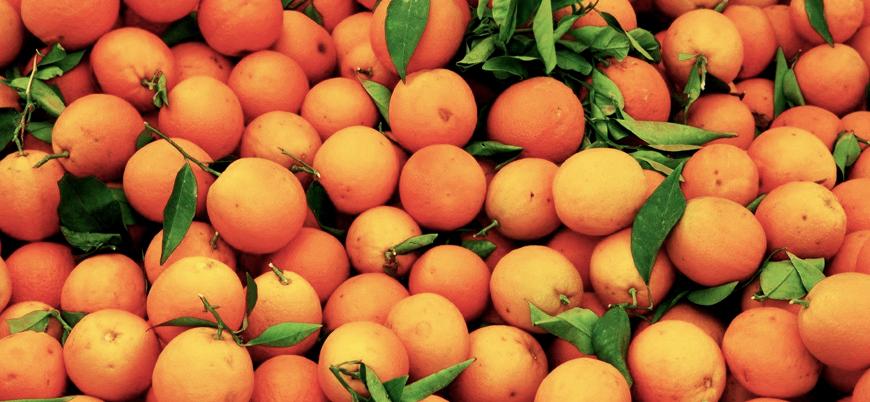 Rusya: Türkiye'den getirilen meyvelerde kolera taşıyıcı tarım zararlısı tespit ediliyor