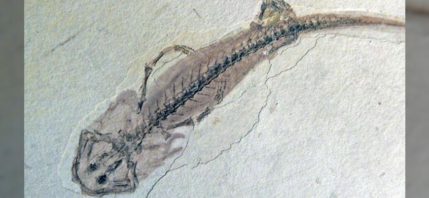 Çin'de '518 milyon yıllık' 20 bin fosil bulundu