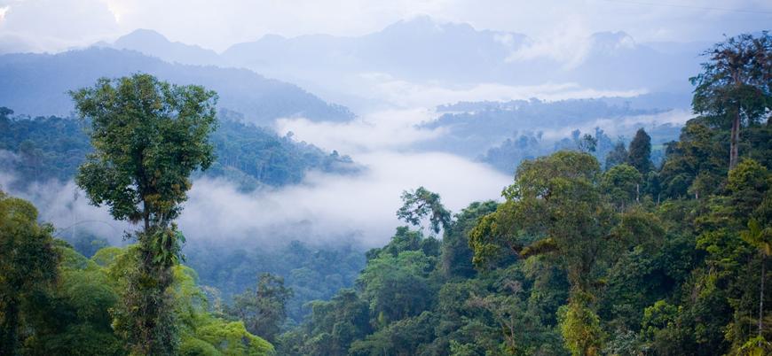 BM: 1 milyon canlı türü çok yakında yok olacak