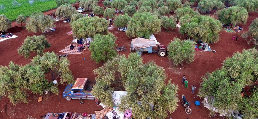 İdlib'de Rus bombardımanından kaçan siviller zeytinliklere sığındı