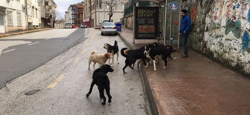 Sokakta vahşet: Köpeklerin saldırdığı kadın öldü