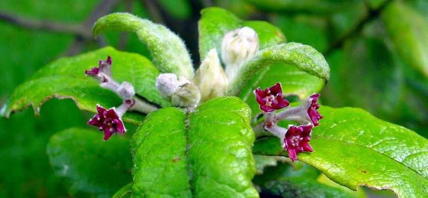 Son 250 yılda 571 bitki türünün nesli tükendi