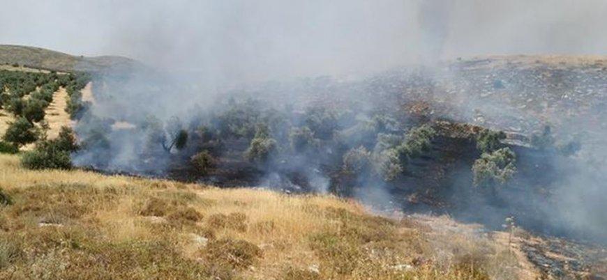 Yahudi yerleşimciler Filistinlilerin zeytin ağaçlarını ateşe verdi