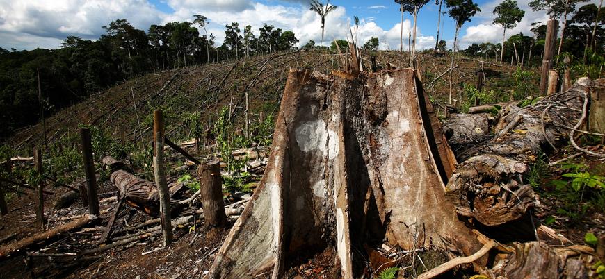 Amazonlar 'ormansızlaşıyor': 'Dünyanın akciğerleri' tehdit altında