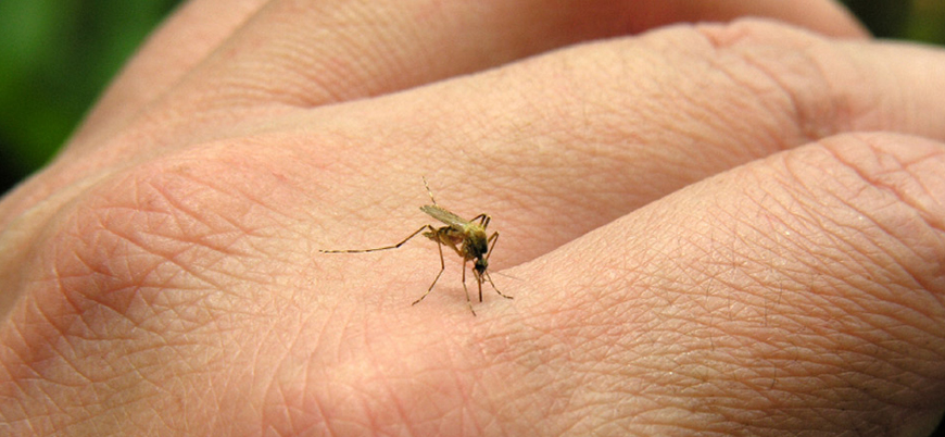 Sivrisinekler neden bazı insanları daha çok ısırır?