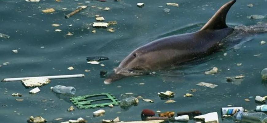 Marmara'da yunustan çok çöp var