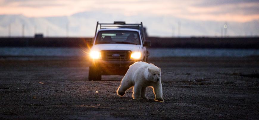 Trump Alaska'da koruma altındaki bölgelerde sondaja izin verecek