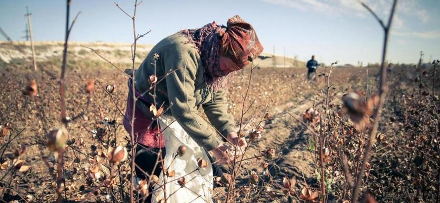 Özbekistan yönetimi kamu çalışanlarını zorla pamuk hasadına yolluyor