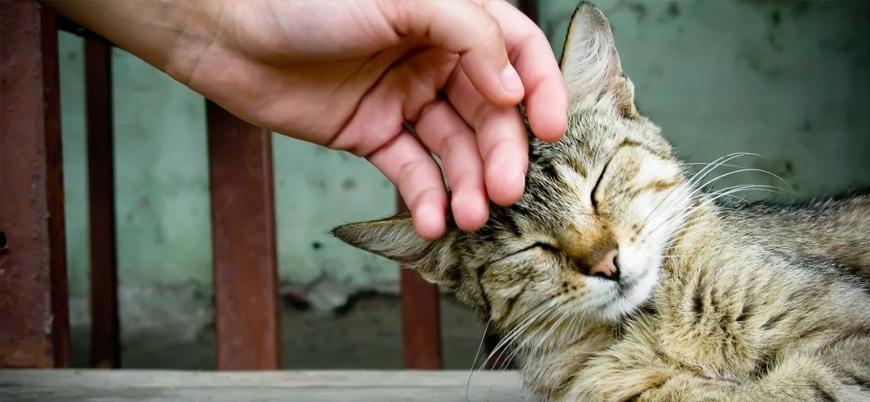 Araştırma: Kediler de köpekler kadar sadık