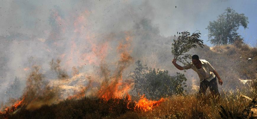 Yahudiler Filistinlilerin zeytin ağaçlarını ateşe verdi