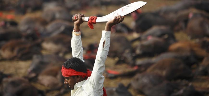 Nepal'de Hinduların 'Gadhimai tanrıçası' ritüeli: On binlerce hayvan kılıçtan geçirildi