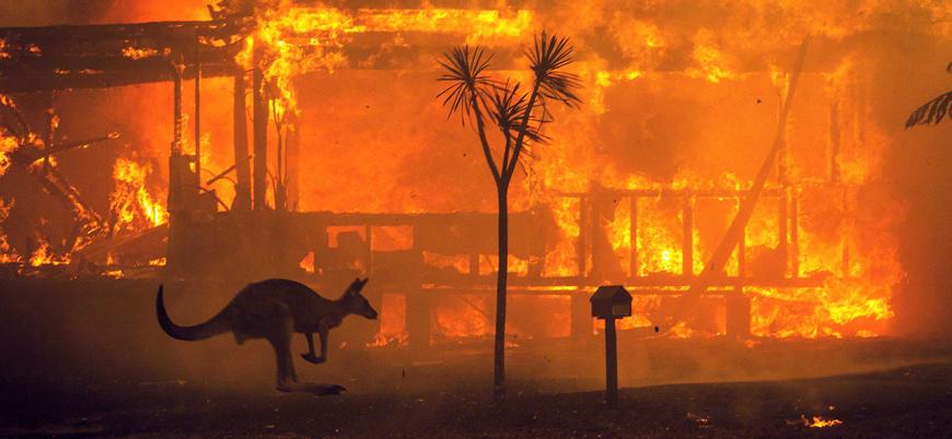 Avustralya'daki devasa yangınlarda 500 milyon hayvan telef oldu