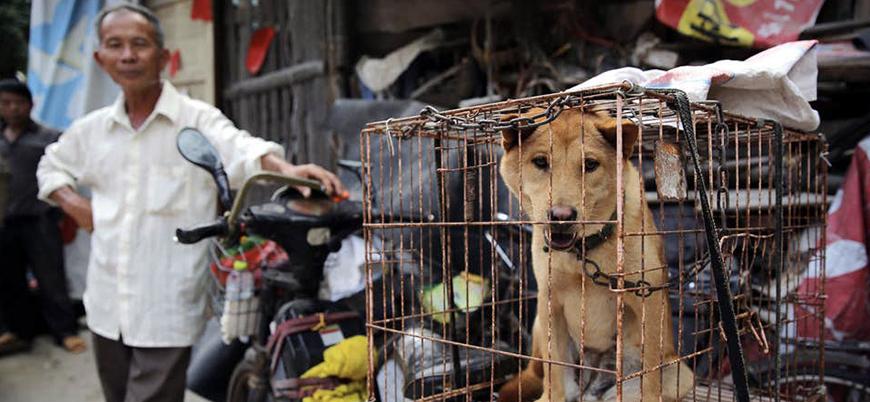 Çin'de hangi hayvanın neresi yeniyor?