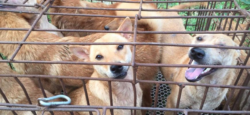 Çin'de koronavirüs nedeniyle kedi ve köpek eti yasaklandı