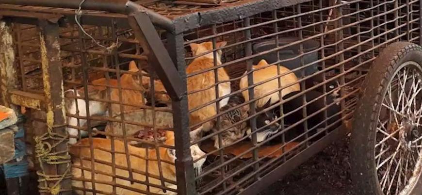 """""""Çin'deki virüs yuvası hayvan pazarları derhal kapatılmalı"""""""