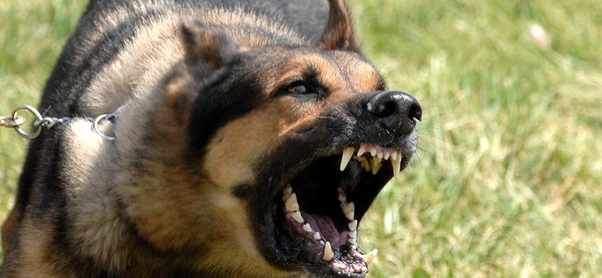 52 yaşındaki kadın kendi köpeği tarafından parçalandı