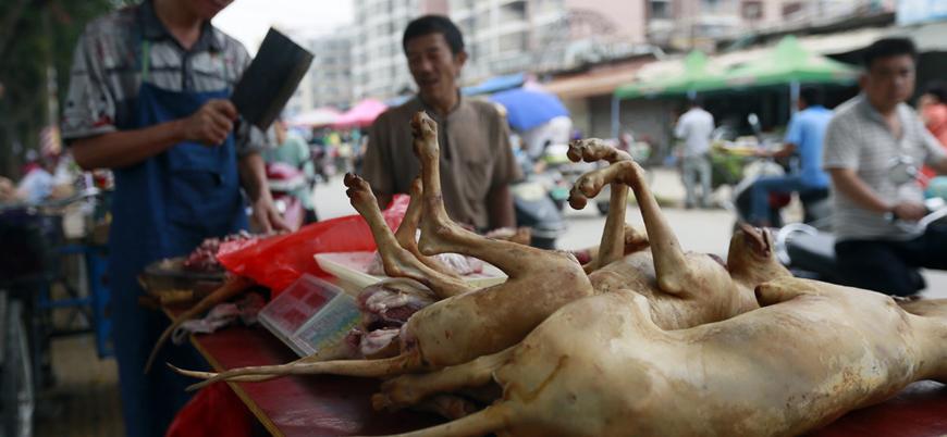 Çin'de on binlerce köpeğin kesilerek yenildiği 'festival' başladı