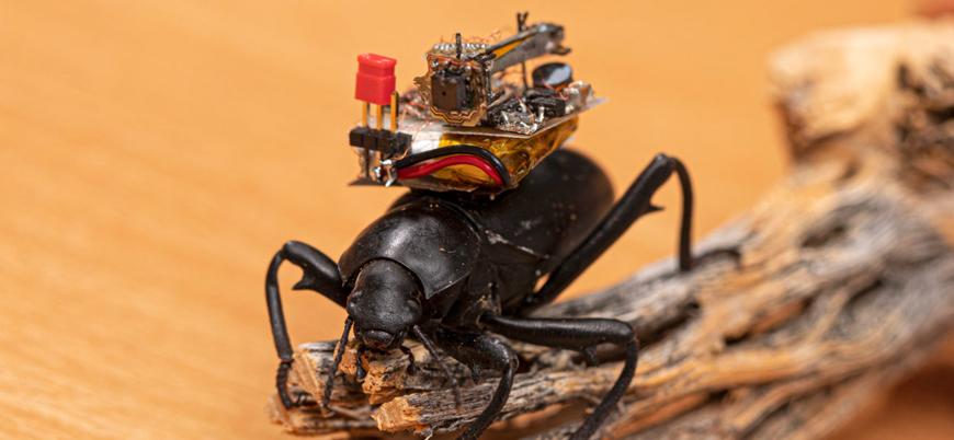 Böceklerin üzerine yerleştirebilecek kadar küçük kameralar geliştirildi