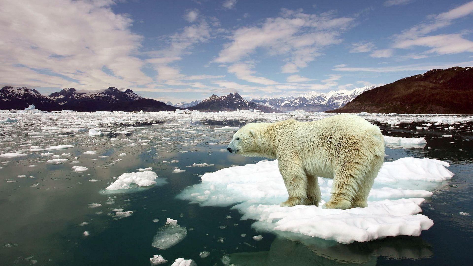 Tehlike kapıda: 2016 en sıcak yıl oldu